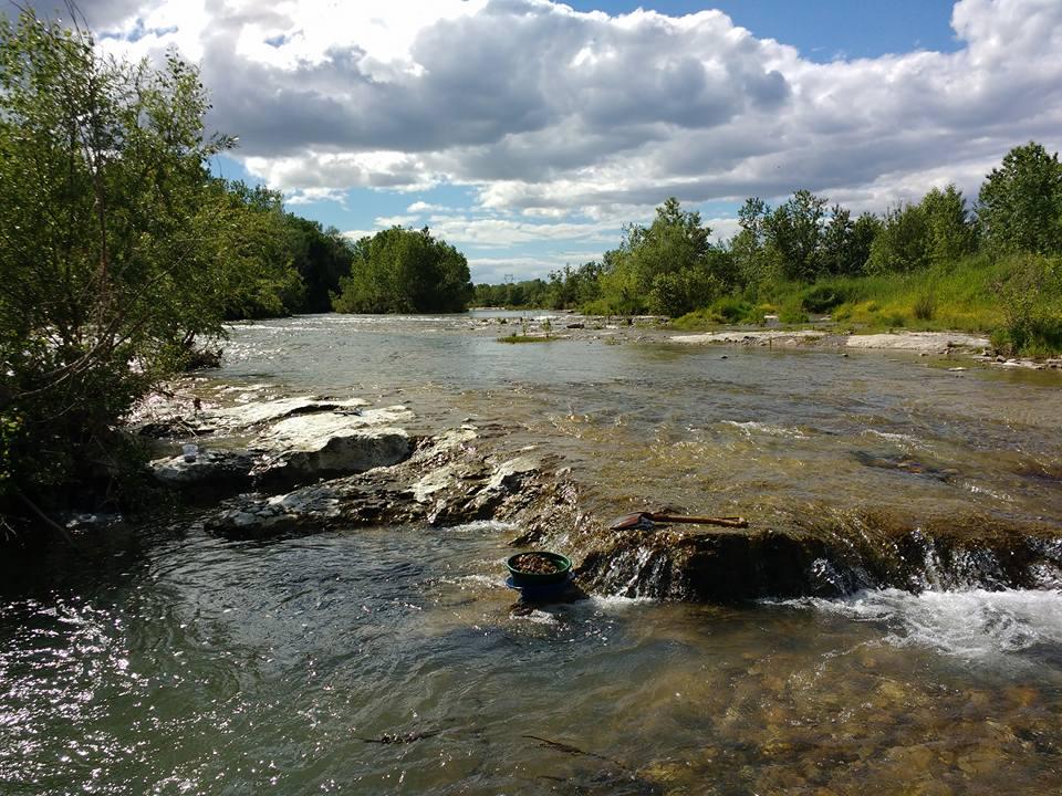 rivière aurifère du gard avec beaucoup d'or en perspective